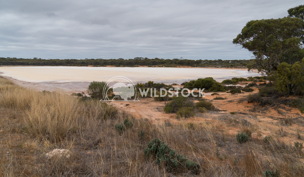 Salt lakes, Outback of Western Australia 3 Alexander Ludwig Landscape with salt lakes on an overcast day in Western Aust