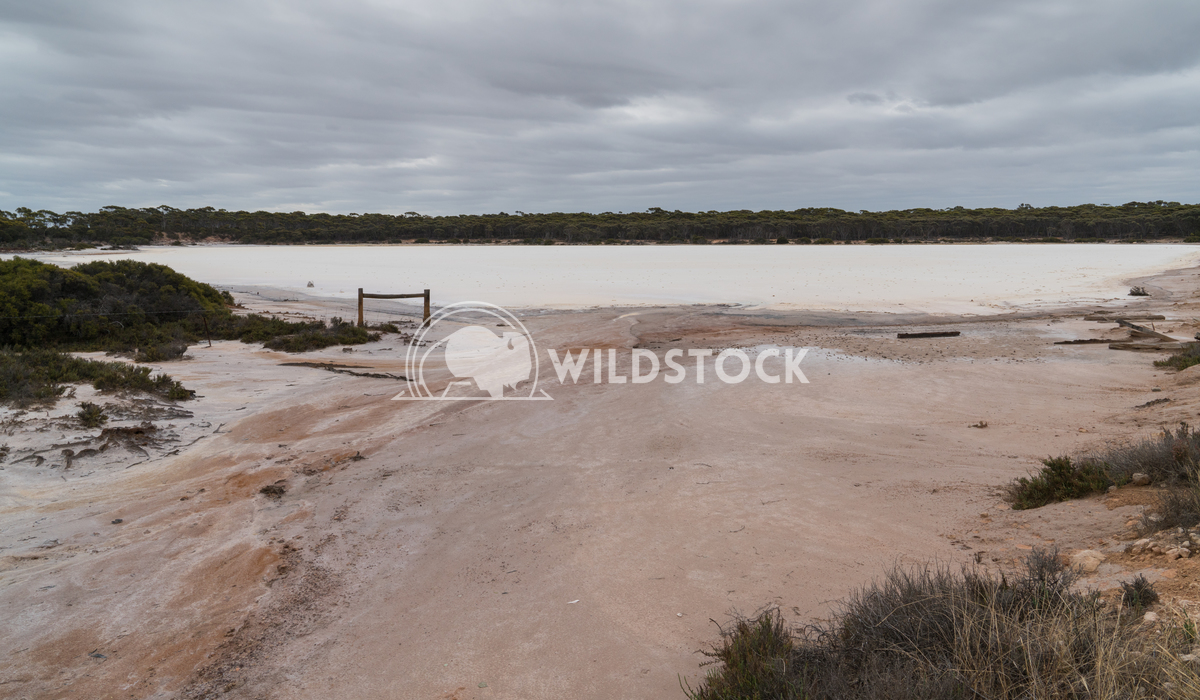Salt lakes, Outback of Western Australia 4 Alexander Ludwig Landscape with salt lakes on an overcast day in Western Aust