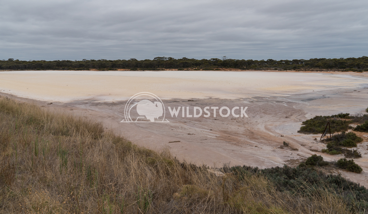 Salt lakes, Outback of Western Australia 5 Alexander Ludwig Landscape with salt lakes on an overcast day in Western Aust