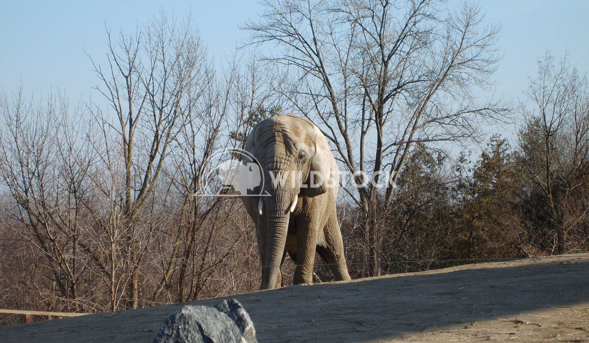 Elephant 1  Chris Kingdon