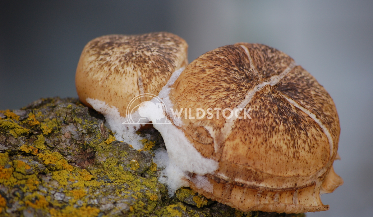 Frozen Mushrooms Chris Kingdon