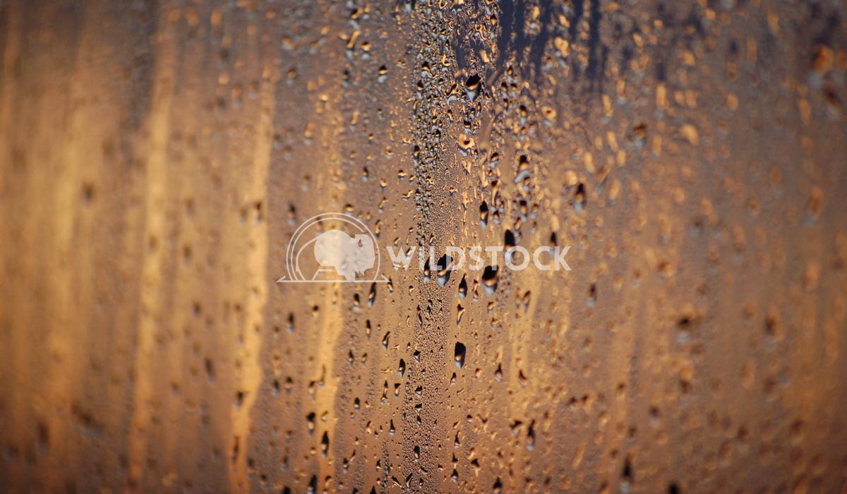 rain on window Chris Kingdon