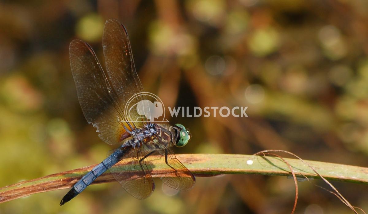Dragonfly1 Chris Kingdon