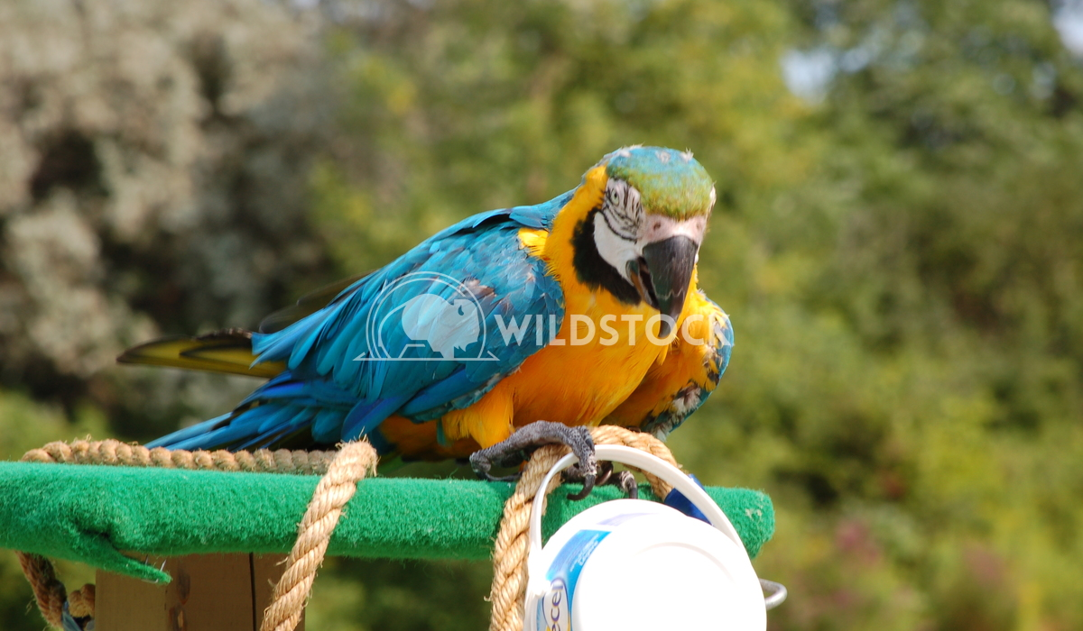 Parrot2 Chris Kingdon