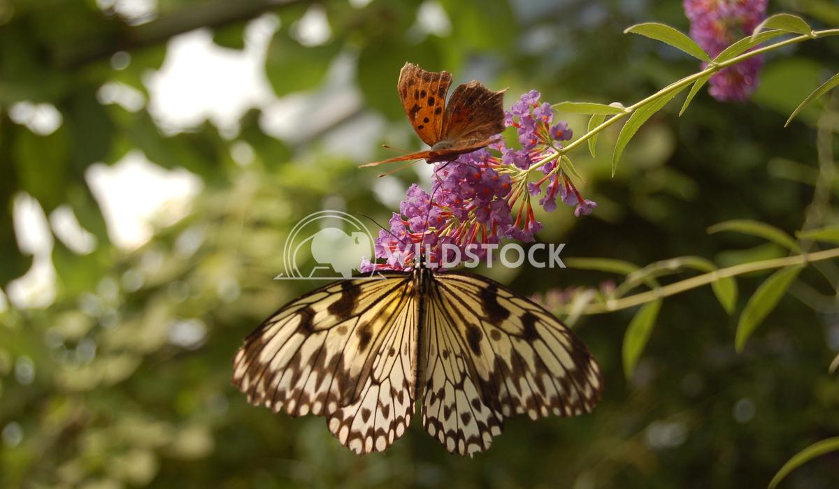 Butterfly Conservatory 1 Chris Kingdon