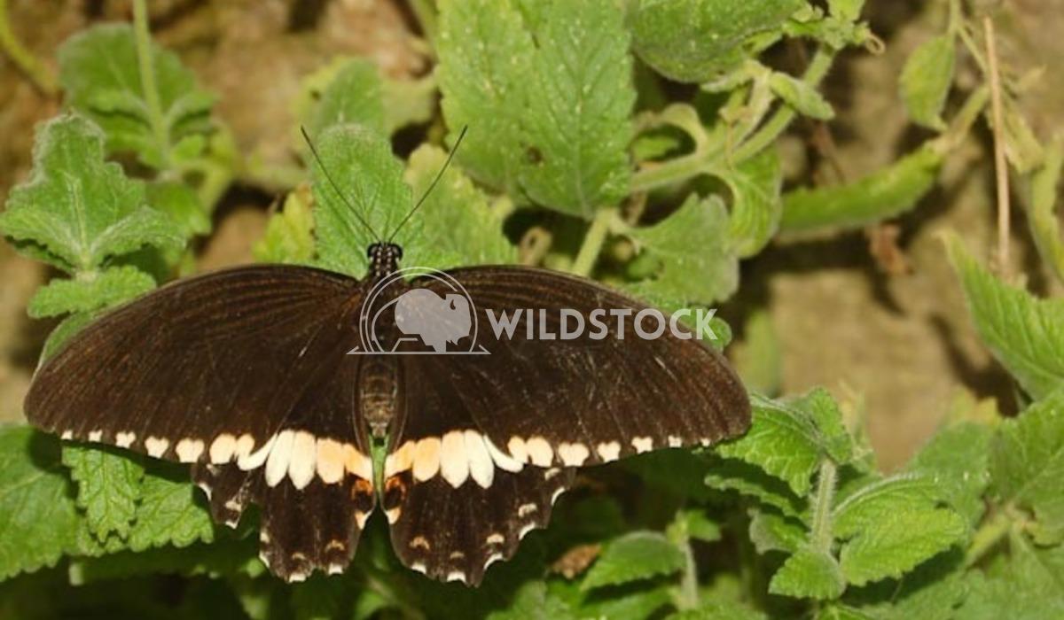 Butterfly Conservatory 4 Chris Kingdon