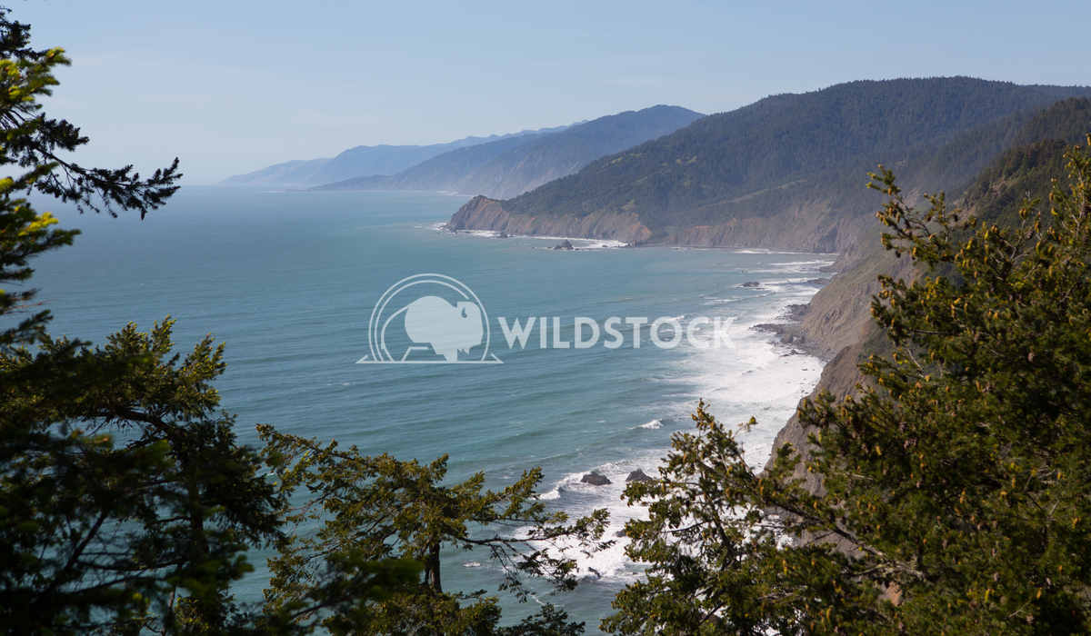 Up High Lost Coast  Henry McCluster
