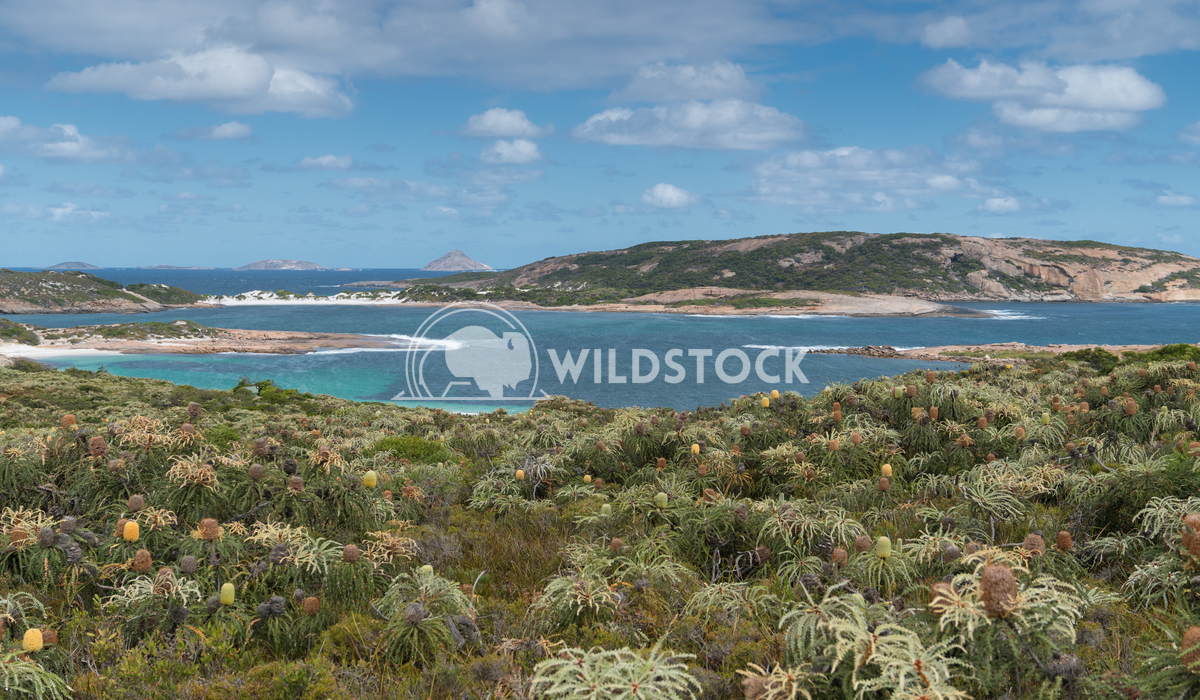 Wharton Beach, Cape Le Grand National Park, Western Australia 7 Alexander Ludwig White Wharton Beach on a summer day, on