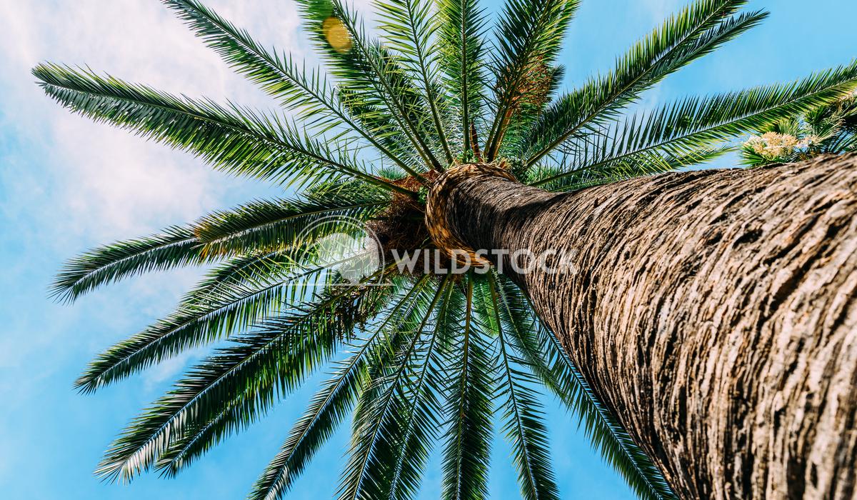 Green Palm Tree On Blue Sky Radu Bercan Green Palm Trees On Blue Sky