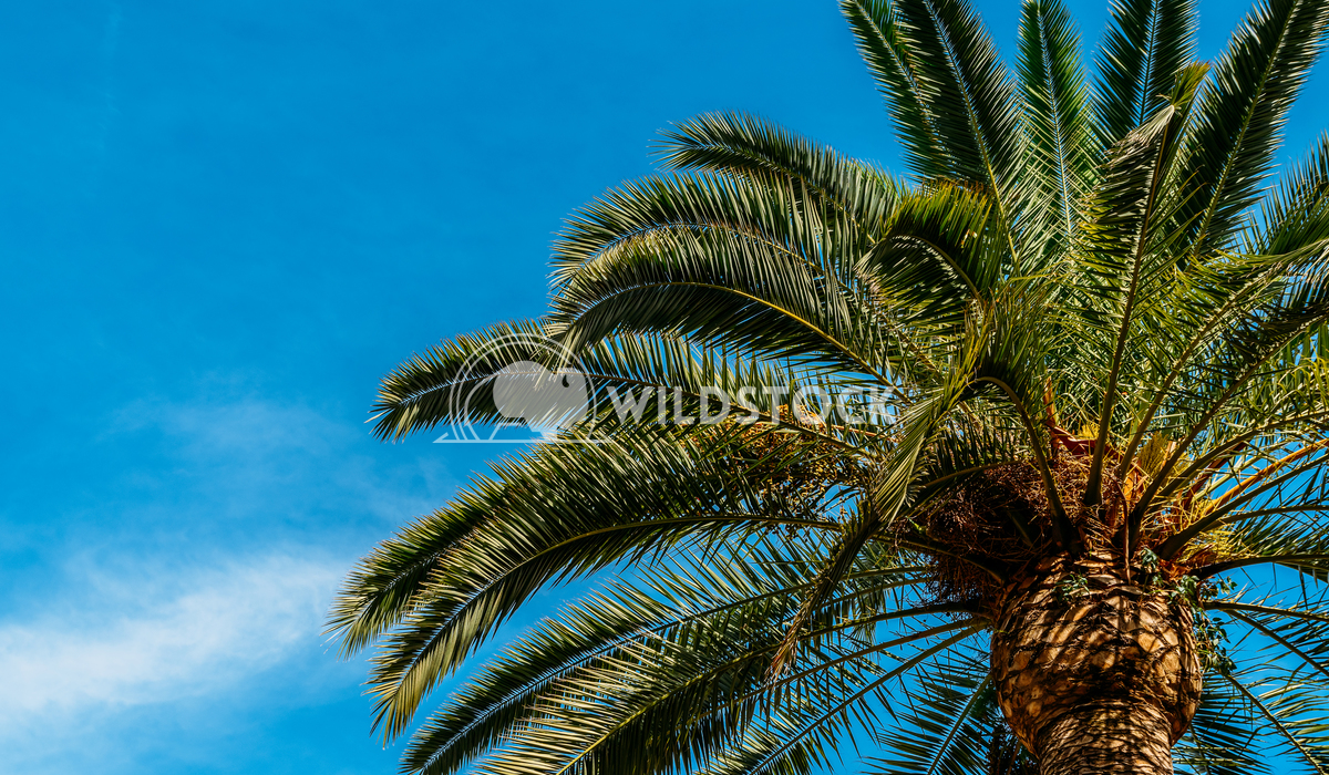 Green Palm Tree On Summer Blue Sky Radu Bercan Green Palm Trees On Blue Sky