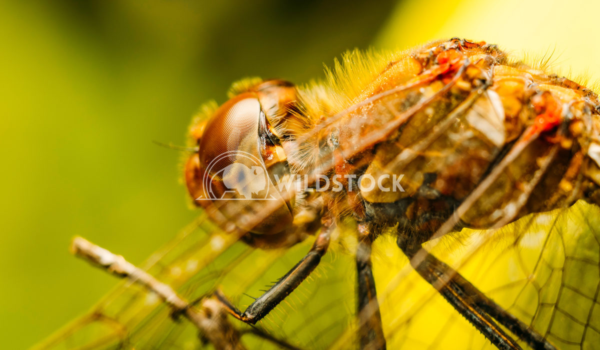 Extreme Macro Of A Dragonfly Radu Bercan Extreme Macro Of A Dragonfly
