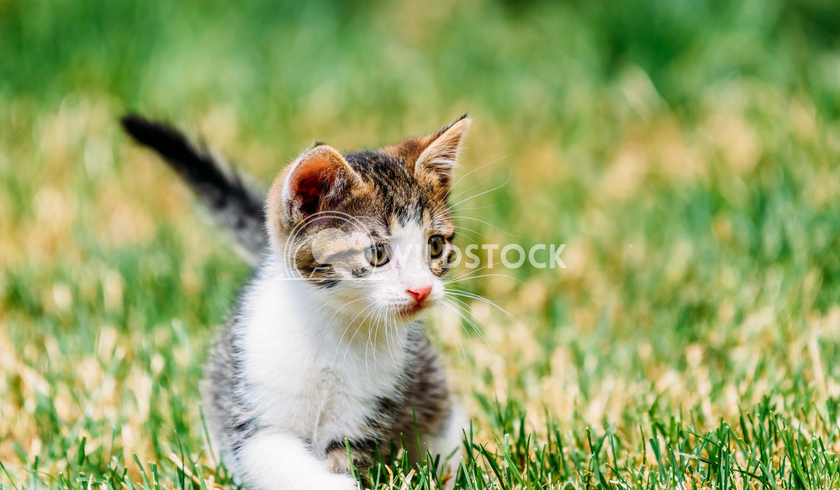 Baby Cat Playing In Grass Radu Bercan Baby Cat Playing In Grass
