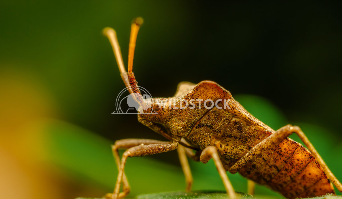 Shield Bug On A Leaf Radu Bercan Shield Bug On A Leaf