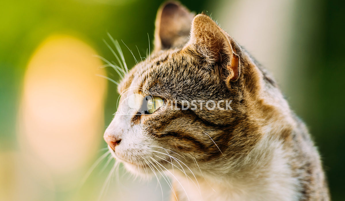 Cute Domestic Cat Portrait Radu Bercan Cute Domestic Cat Portrait