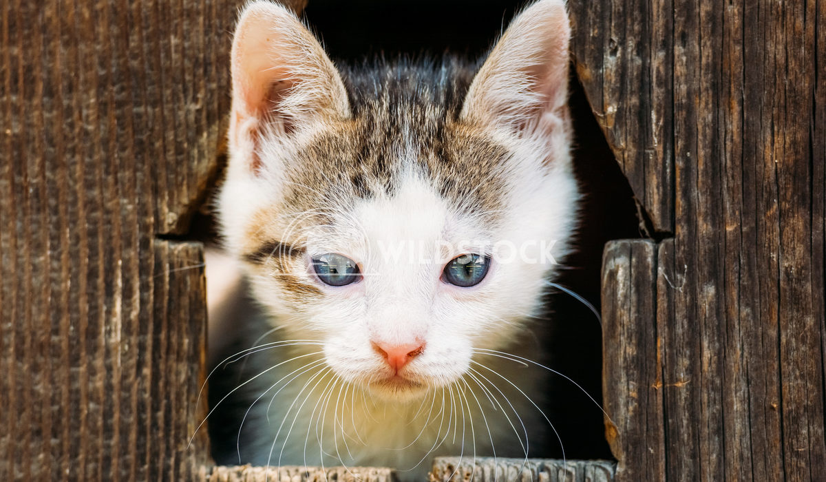 Cute Small Baby Kitty Cat Portrait Radu Bercan Cute Small Baby Kitty Cat Portrait