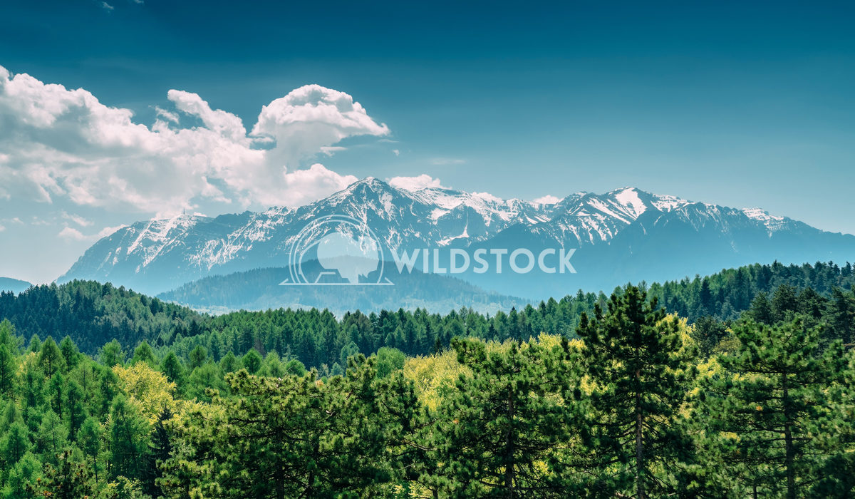 Carpathian Mountains Landscape With Blue Sky In Summer Radu Bercan Carpathian Mountains Landscape With Blue Sky In Summe