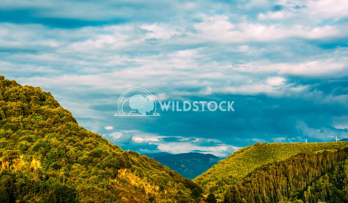 Carpathian Mountains Forest With Blue Summer Sky Radu Bercan Carpathian Mountains Forest View With Blue Summer Sky