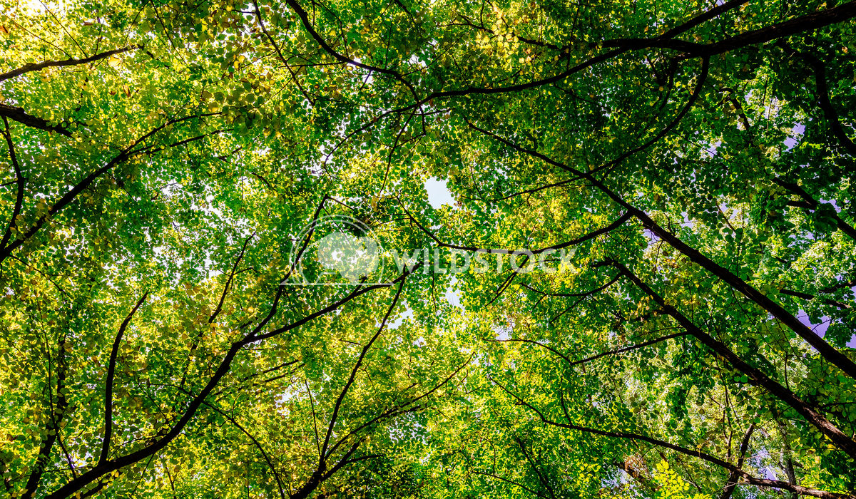 Tree Branches And Leaves On Summer Blue Sky Radu Bercan Tree Branches And Leaves On Summer Blue Sky