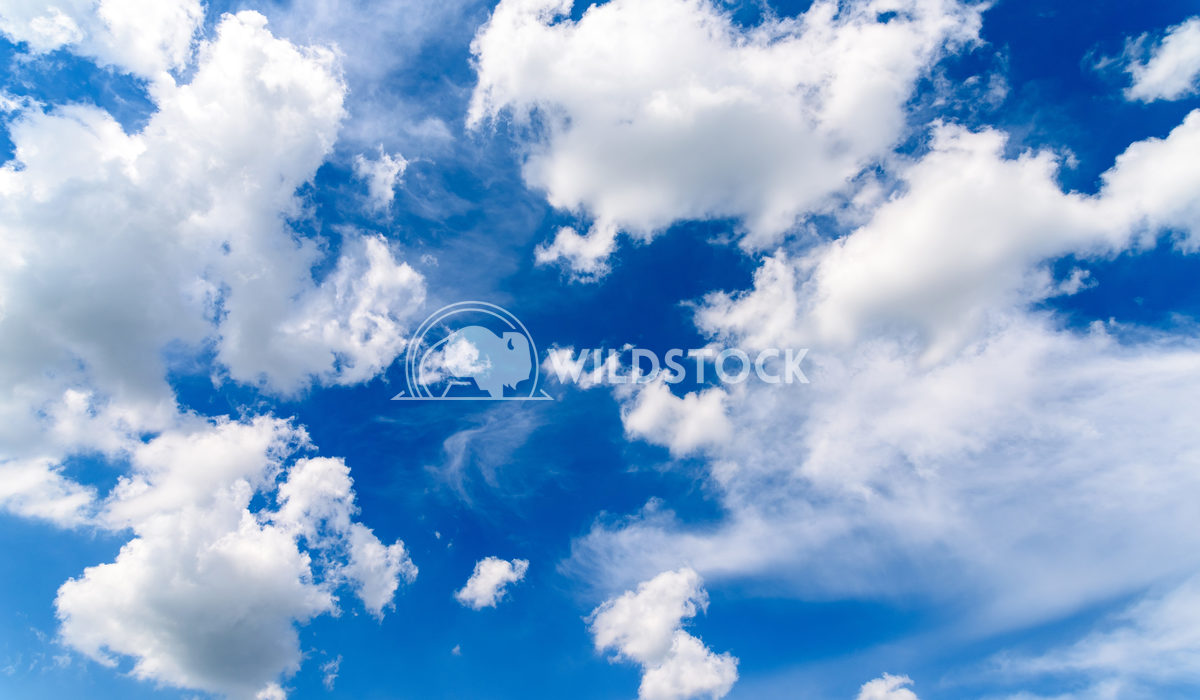 White Cumulus Clouds On Blue Sky In Summertime Radu Bercan White Cumulus Clouds On Blue Sky