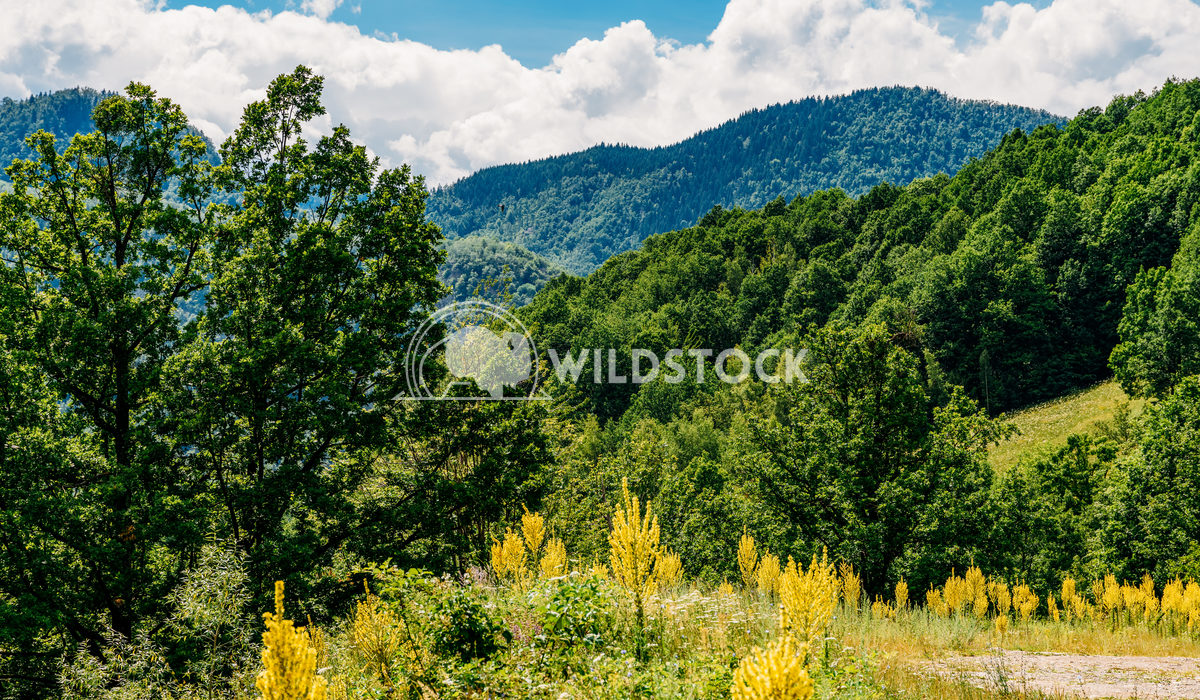 Beautiful Carpathian Mountain Landscape In Romania Radu Bercan Beautiful Carpathian Mountains Summer Landscape In Romani