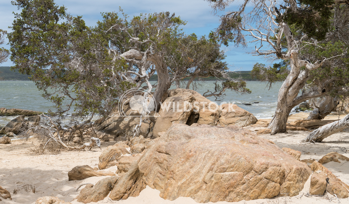 Stokes National Park, Western Australia 2 Alexander Ludwig Lakeside landscape within the Stokes National Park, Western A