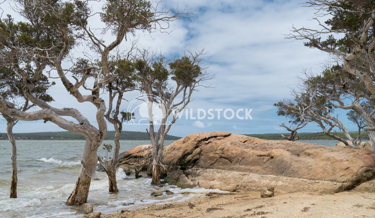 Stokes National Park, Western Australia 4 Alexander Ludwig Lakeside landscape within the Stokes National Park, Western A