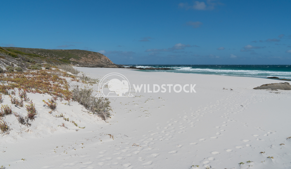 Beach, Fitzgerald River National Park, Western Australia 6 Alexander Ludwig Beautiful place within the Fitzgerald River