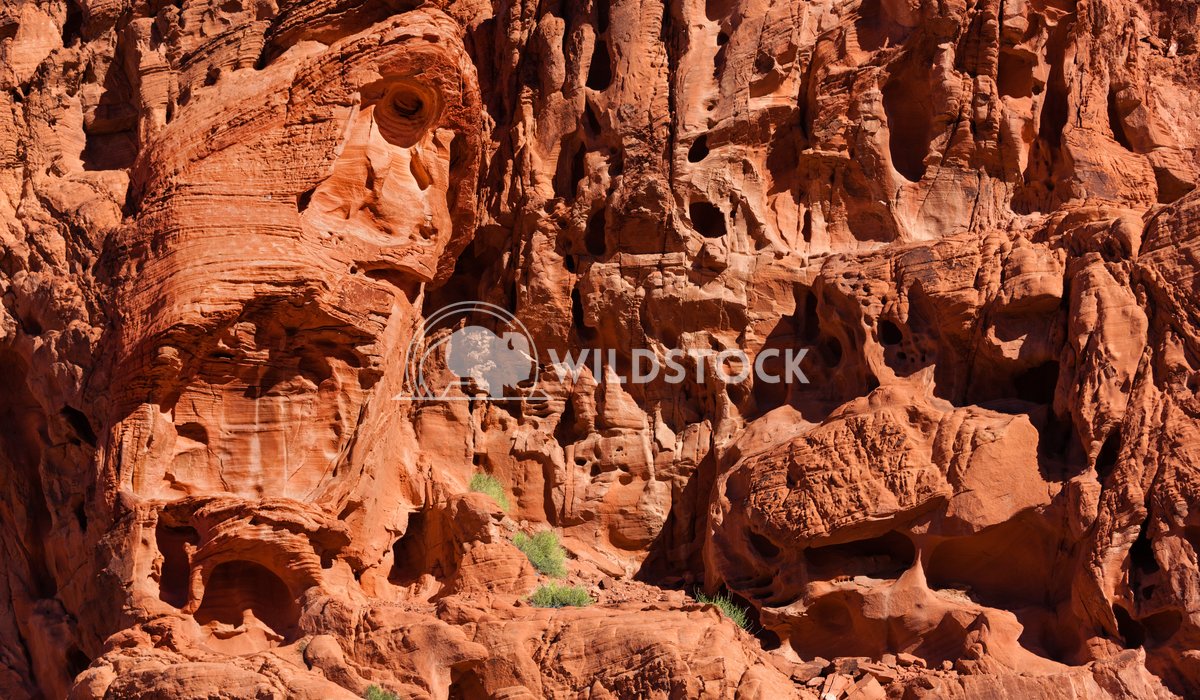 Face of fire Lara Eichenwald Geological  formations in Valley of Fire State Park Nevada