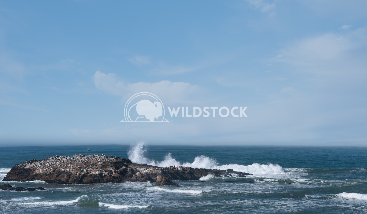 Pelican's island Lara Eichenwald Pacific Ocean