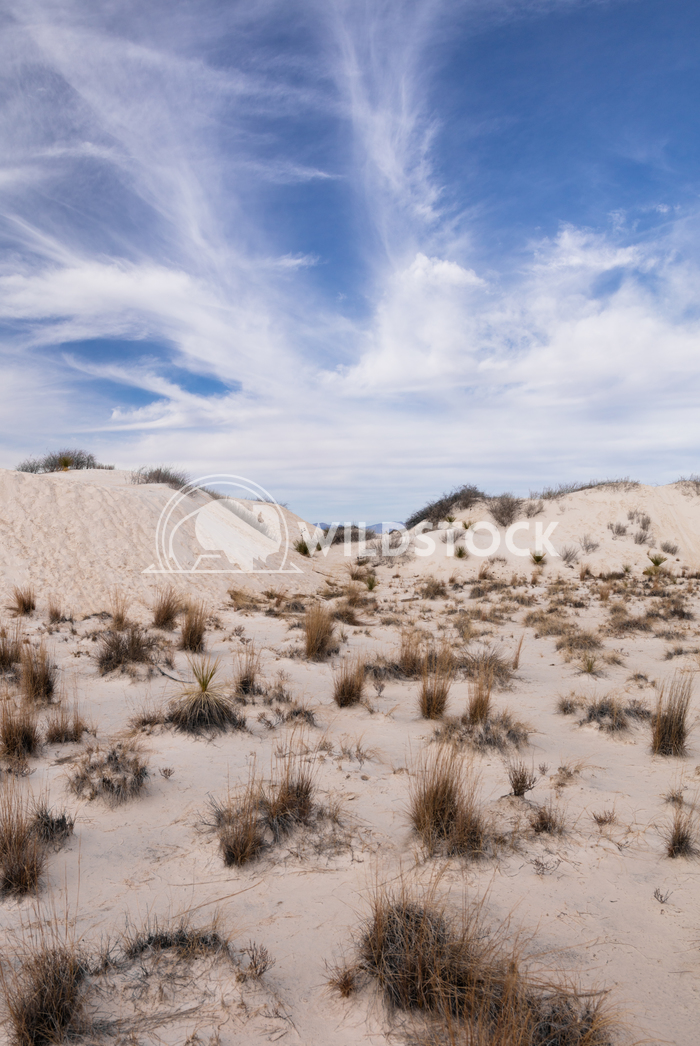 Desert vegetation Lara Eichenwald White Sands National Monument in New Mexico