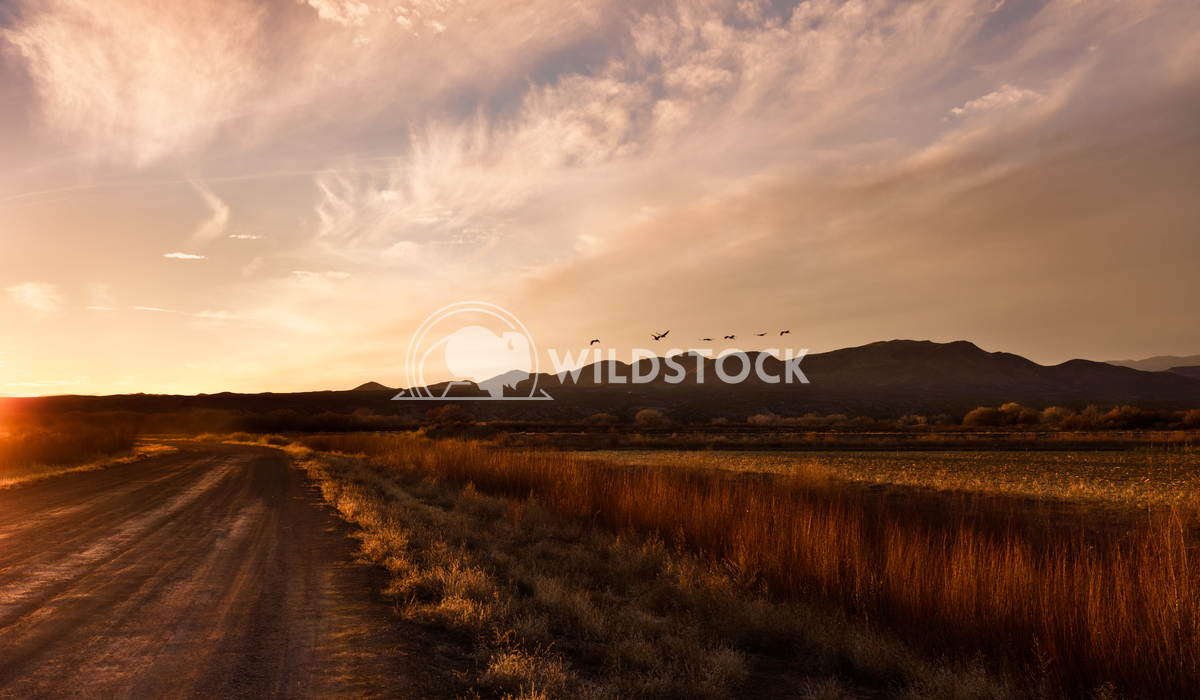 Plains and Mountains of Bosque del Alpache Lara Eichenwald Bosque del Apache National Wildlife Refuge in New Mexico. 