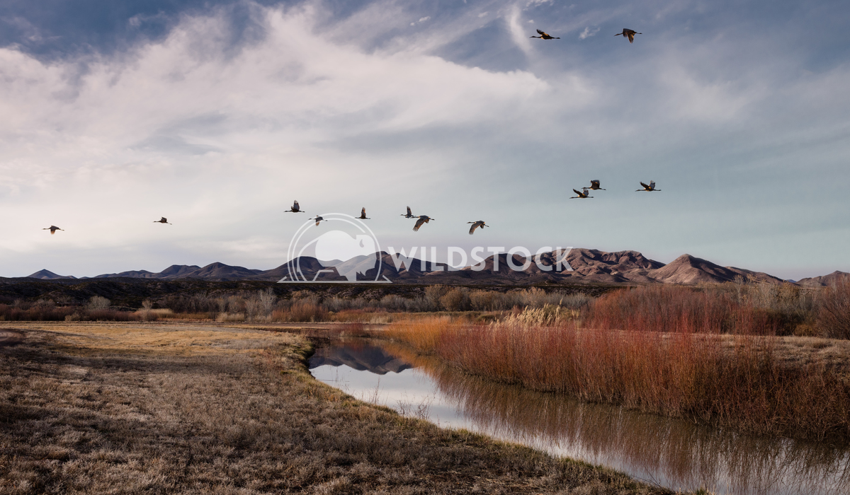 Riverbanks nad Mountains of Bosque del Apache Lara Eichenwald Bosque del Apache National Wildlife Refuge in New Mexico.