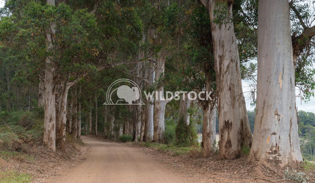 Mount Frankland National Park, Western Australia 1 Alexander Ludwig Gravel road through the forests of the Mount Frankla
