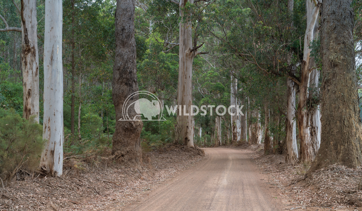 Mount Frankland National Park, Western Australia 2 Alexander Ludwig Gravel road through the forests of the Mount Frankla