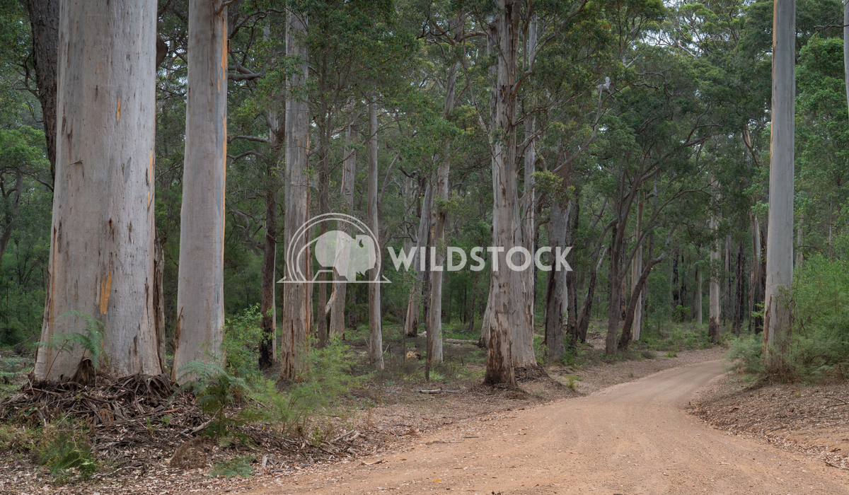 Mount Frankland National Park, Western Australia 3 Alexander Ludwig Gravel road through the forests of the Mount Frankla