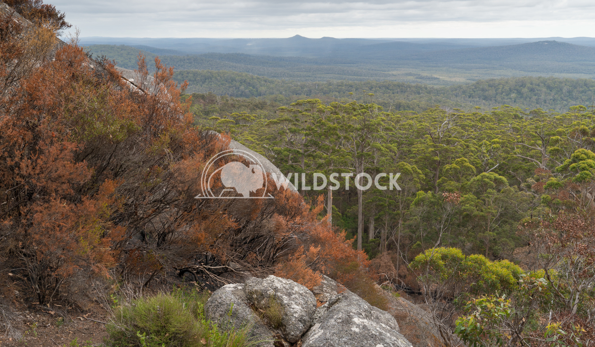 Mount Frankland National Park, Western Australia 4 Alexander Ludwig Panoramic view over the forests of the Mount Frankla