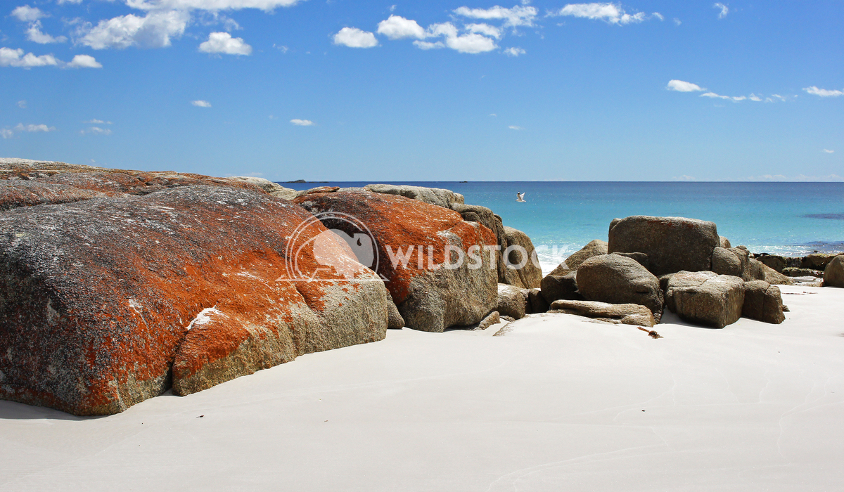 Bay of Fires, Tasmania, Australia 1 Alexander Ludwig Bay of Fires, one of the most beautiful beaches of the world, Tasma