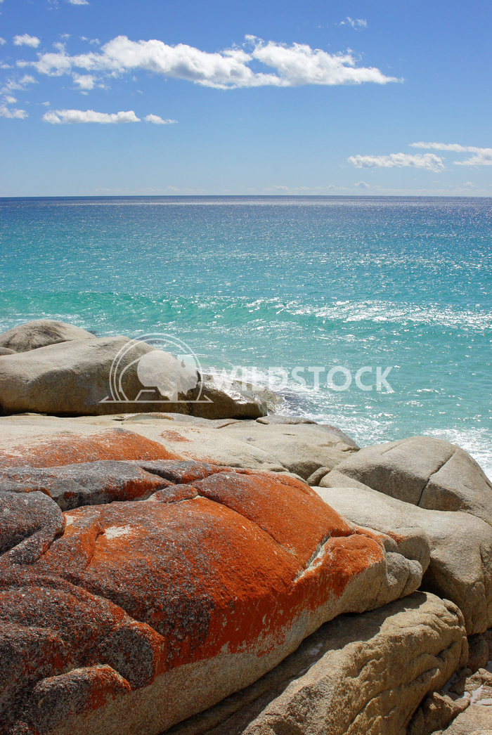 Bay of Fires, Tasmania, Australia 3 Alexander Ludwig Bay of Fires, one of the most beautiful beaches of the world, Tasma