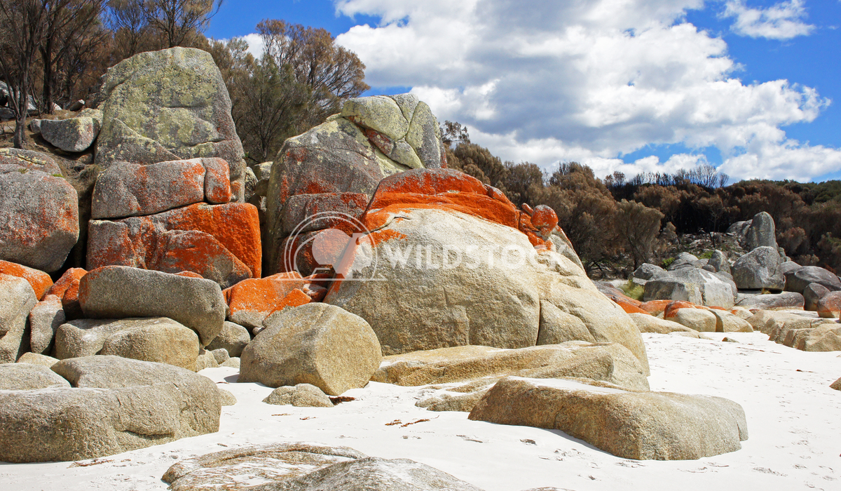 Bay of Fires, Tasmania, Australia 4 Alexander Ludwig Bay of Fires, one of the most beautiful beaches of the world, Tasma