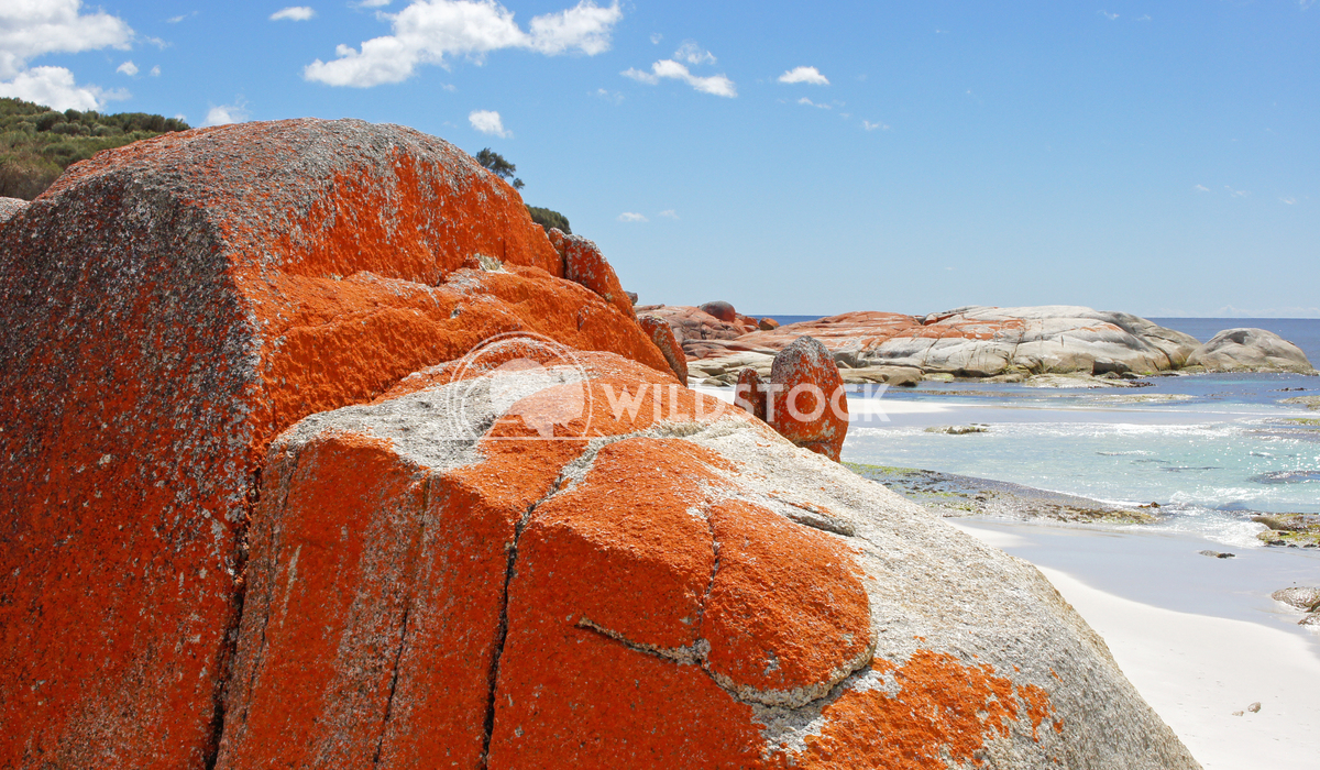 Bay of Fires, Tasmania, Australia 5 Alexander Ludwig Bay of Fires, one of the most beautiful beaches of the world, Tasma