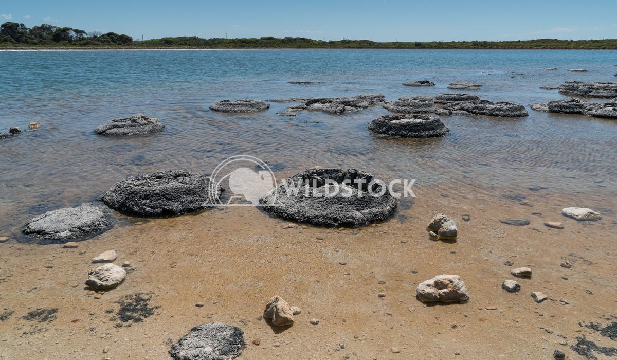 Stromatolite on lake Thetis, Nambung National Park, Western Australia 5 Alexander Ludwig Stromatolite on lake Thetis in