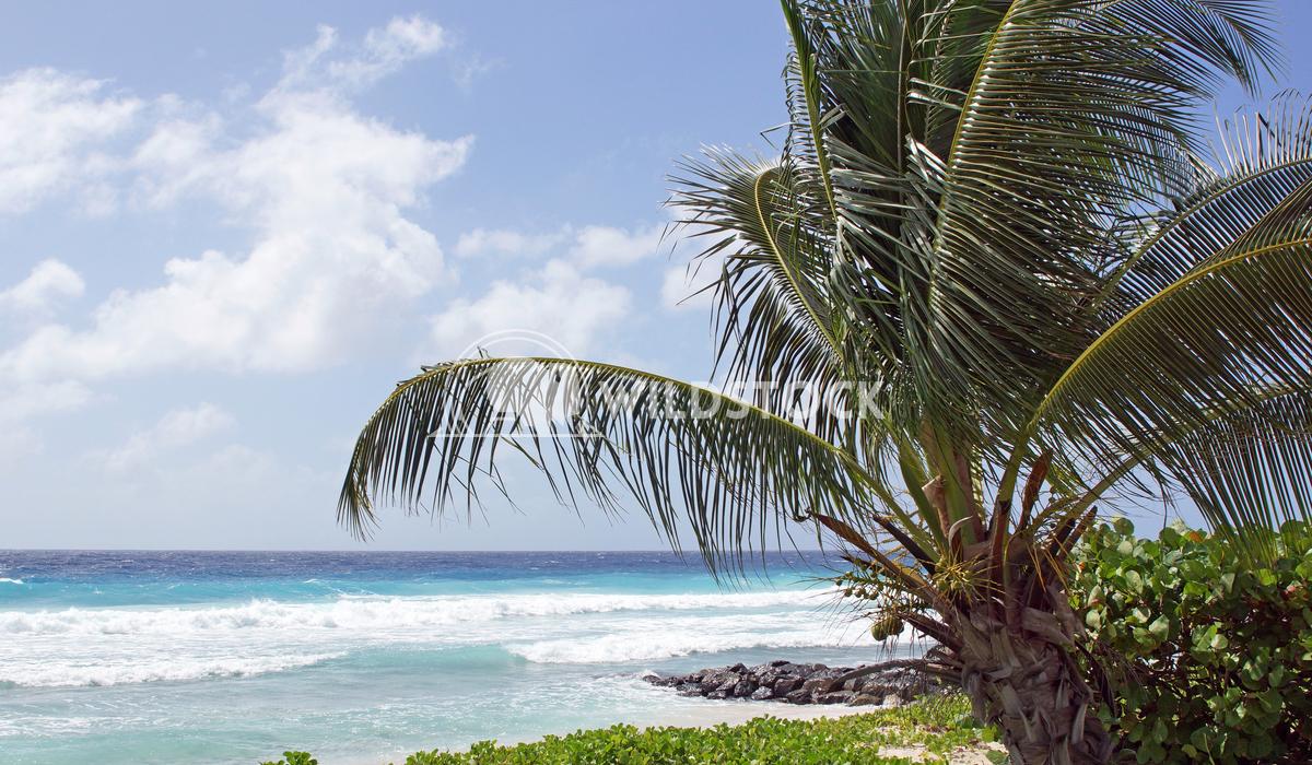 Barbados, Caribbean 1 Alexander Ludwig Tropical coast close to Bridgetown, Barbados, Caribbean