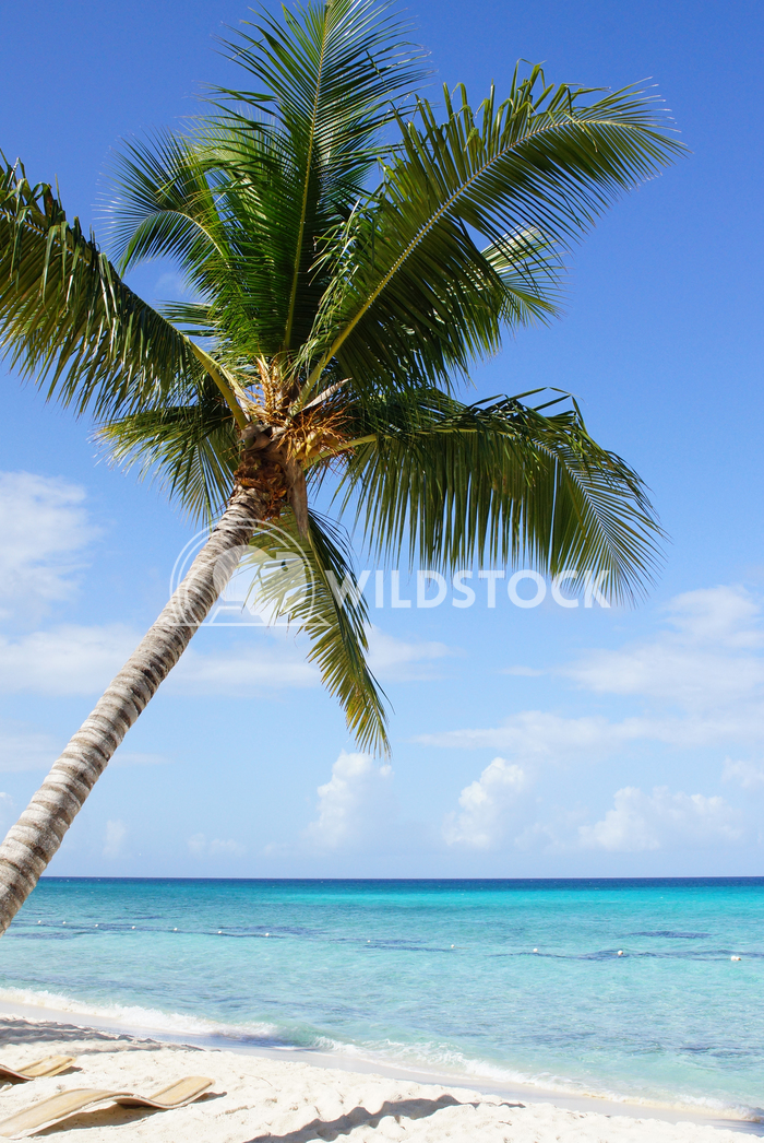 Caribbean Beach, Dominican Republic 1 Alexander Ludwig Beautiful beach with palm tree in the Dominican Republic, Caribbe