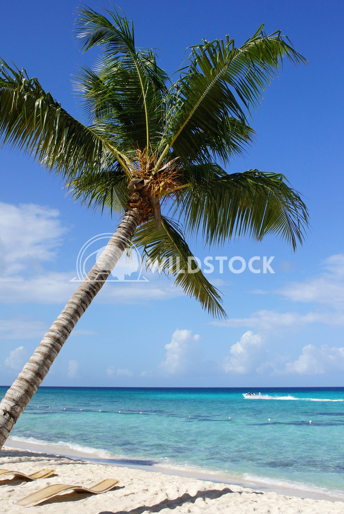 Caribbean Beach, Dominican Republic 3 Alexander Ludwig Beautiful beach with palm tree in the Dominican Republic, Caribbe