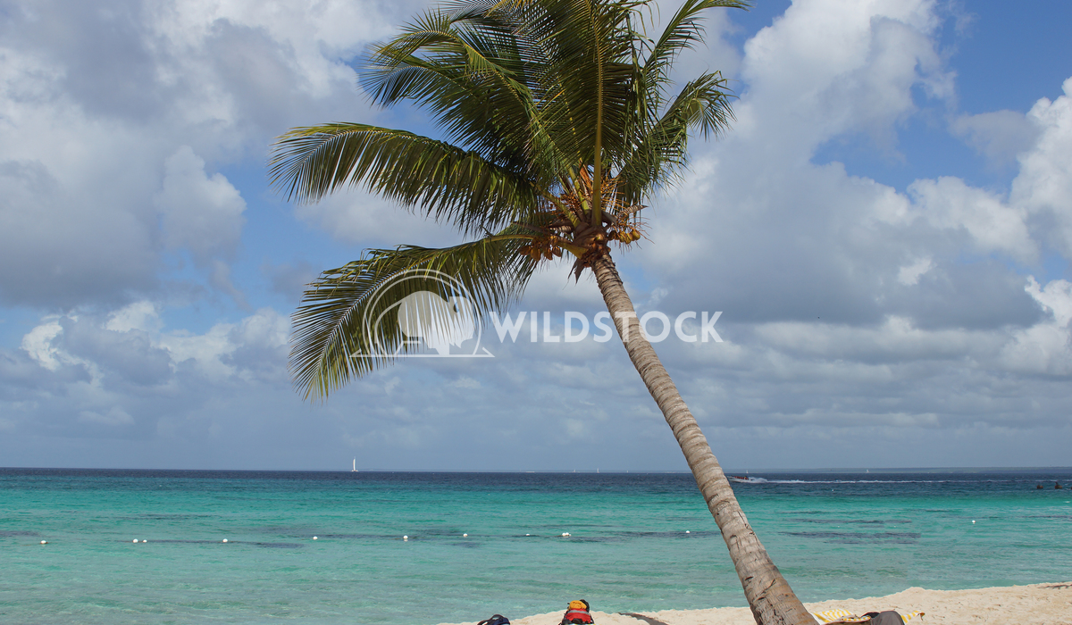 Caribbean Beach, Dominican Republic 4 Alexander Ludwig Beautiful beach with palm tree in the Dominican Republic, Caribbe
