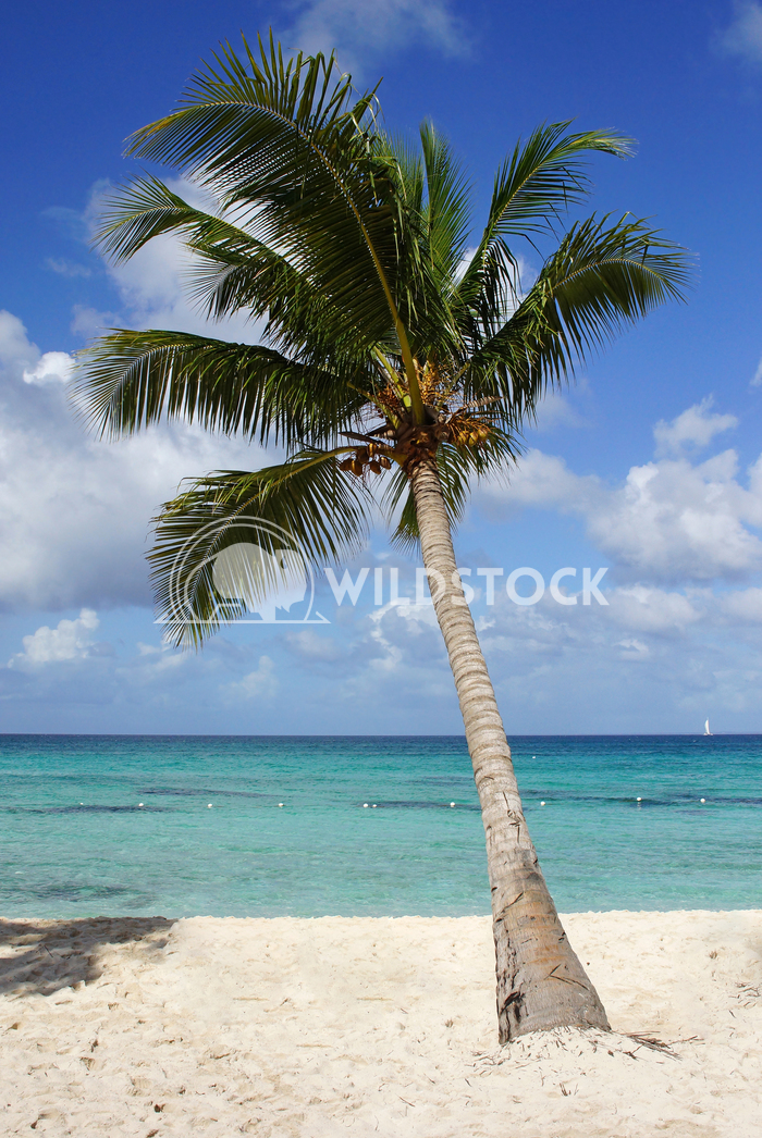Caribbean Beach, Dominican Republic 5 Alexander Ludwig Beautiful beach with palm tree in the Dominican Republic, Caribbe
