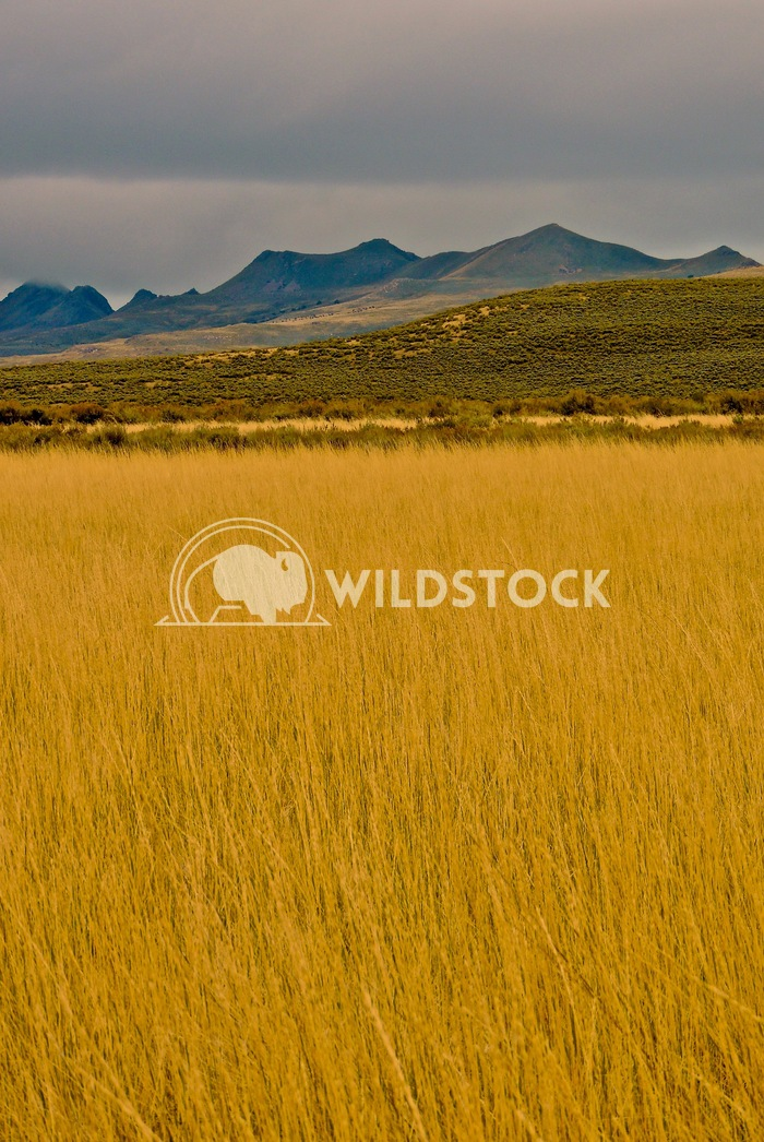 antelope island great salt lake 1 John Anglim