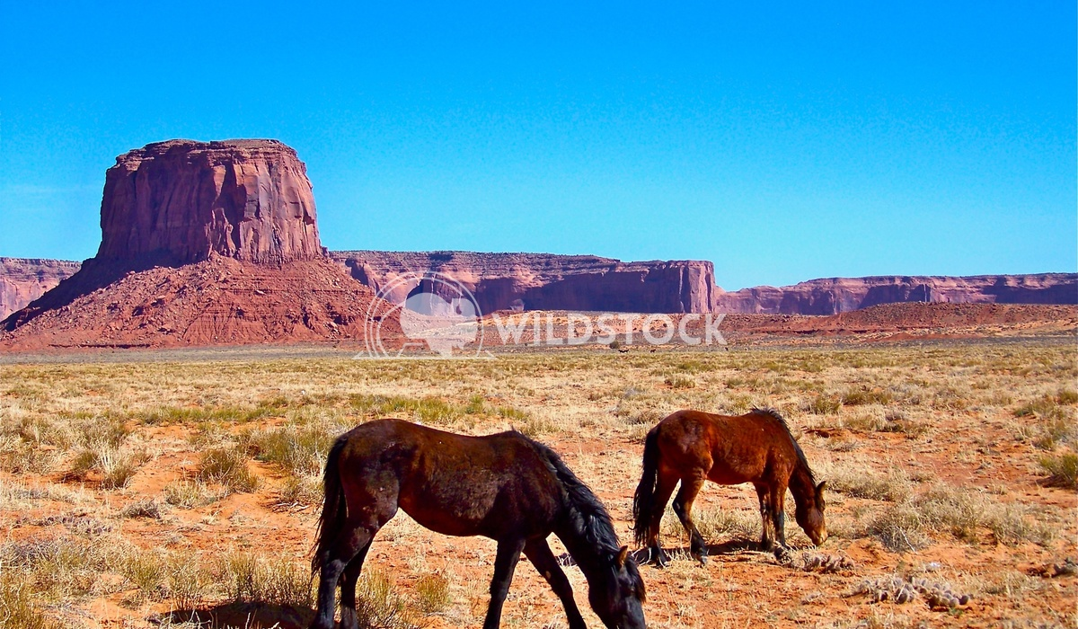 east of monument valley 2 John Anglim