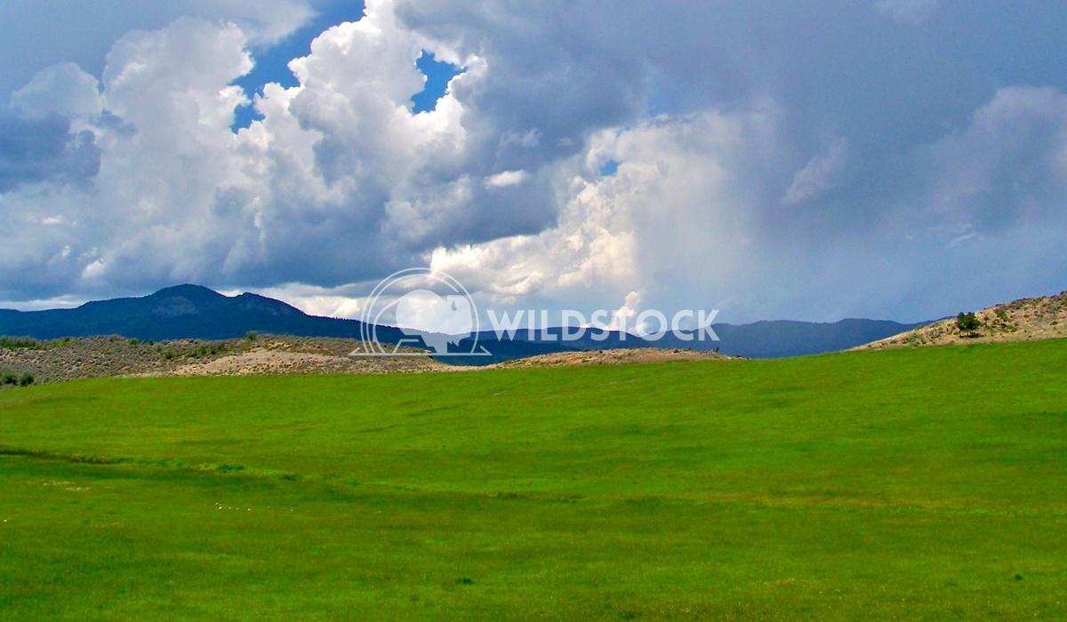 mountain meadow 2 John Anglim