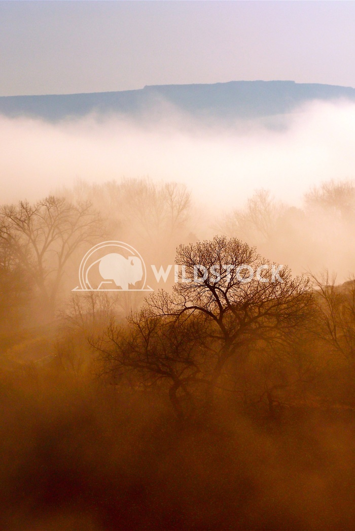 foggy morning John Anglim